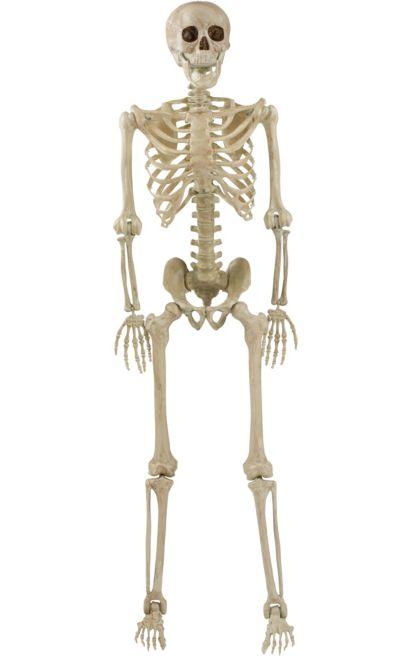 Life-Size Poseable Skeleton