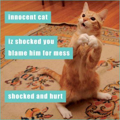 Innocent Cat Lolcats Magnet