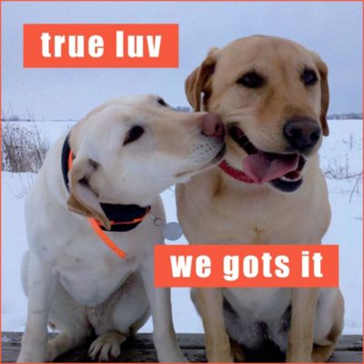 True Luv Loldogs Magnet