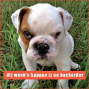 Happee Iz On Backorder Loldogs Magnet