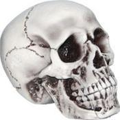 Foam Skull