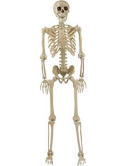Life-Size Posable Skeleton 5ft