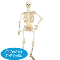 Jointed Glow in the Dark Skeleton Cutout 35in