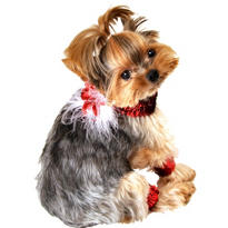 Christmas Dog Collar and Cuff Set 5pc