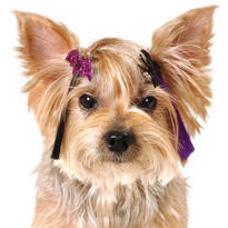 Glitter Halloween Dog Hair Extensions 3ct